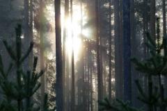 disig skog 2 2018
