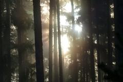 disig skog 2018