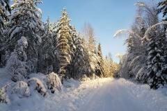 vinterväg 2018